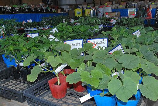 野菜の苗.jpg